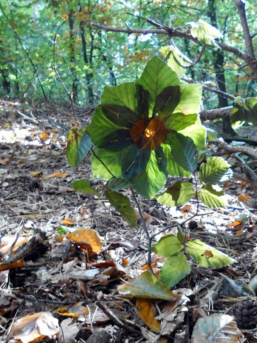 Basteln mit Blättern im Waldkindergarten in Bleckede