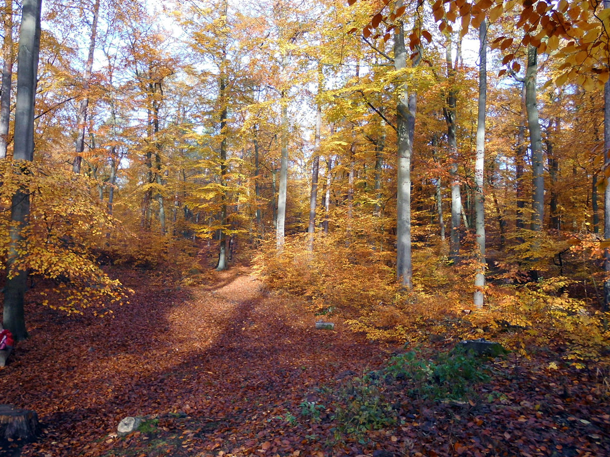 Wald in Bleckede