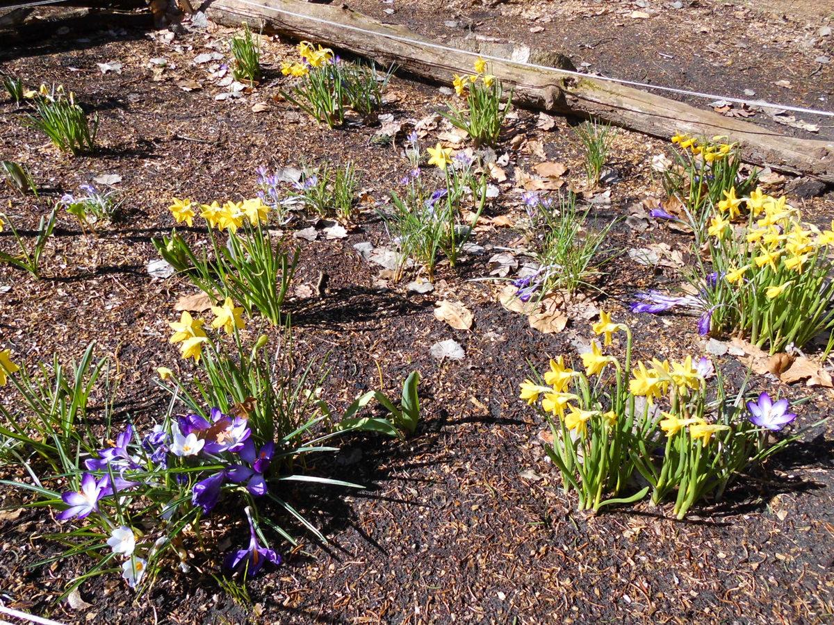 Frühlingsbeet der Kindergarten Kinder in Bleckede